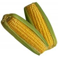 corn_sweet_twin_pack